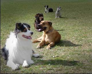 éducation canine nimes